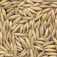 http://www.gurabini.com/documents/crop/origionalImg/seed-oat-seeds02102012121320280.jpg