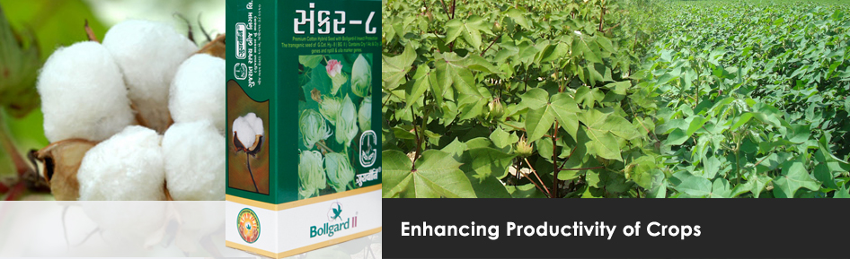 Enhancing Productivity Of Crops